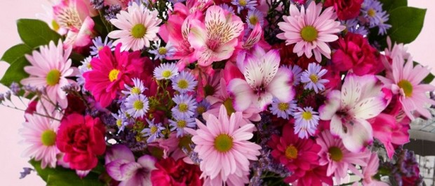 daisies-get-well-flowers-blog120823