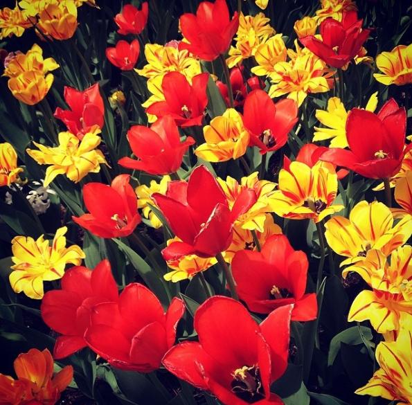 4-Spring-Regina